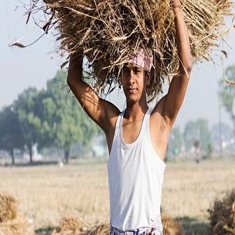 Indian FarmerIndian Farmer