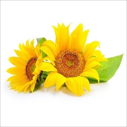 Organic-Sunflower-Lecithin